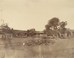 Tree in Palace, Delhi, under which 49 Christians were murdered no [sic] the 15th May 1857.